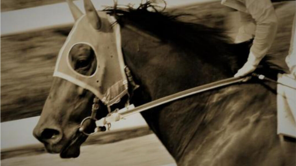 気性の荒い馬ランキング